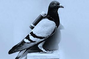 piccione-viaggiatore-inps